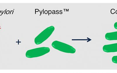 Pylopass Eliminates H. pylori with Confidence