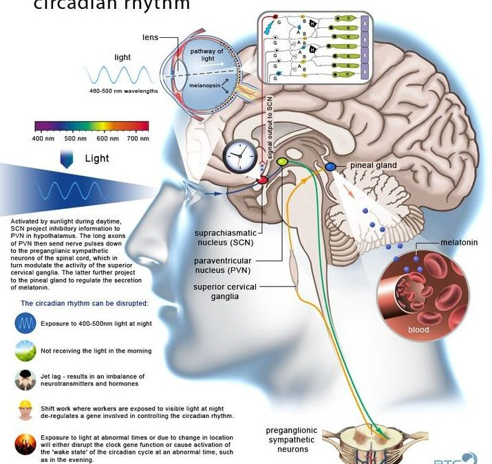 Circadian Rhythm Controlled by light intensity of IR, visible and UV light