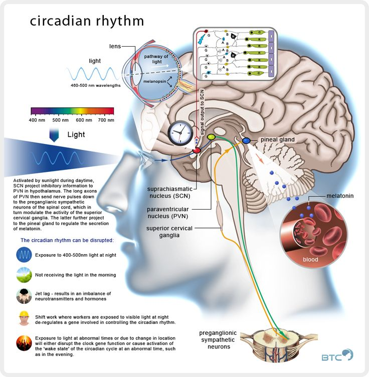 When you get the wrong light at the right time circadian disruption is the byproduct. This affects all the clock proteins in the CNS and PNS.