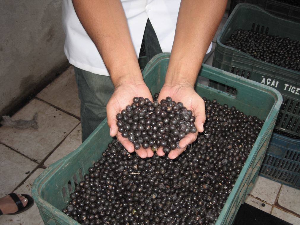 Fresh Acai Berries Brazil