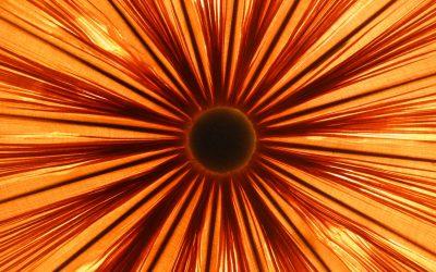 The Sun creates life