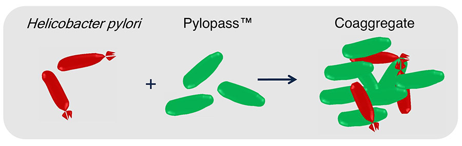 Pylopass -The first effective bacterial preparation of H. pylori elimination order - 714-639-4360