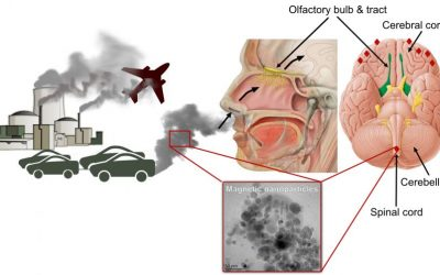 Air Pollution Increases Inflammation Which Damages Our Genes and Cells