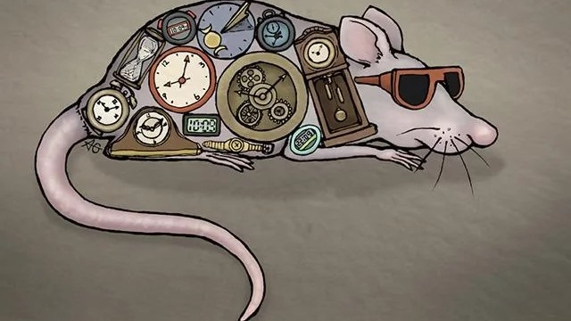 neuropsin can control circadian rhythm independent of the brain