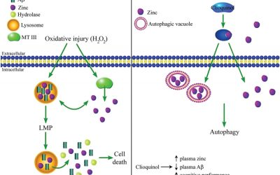 Zinc, Zinc Ionophore, COVID-19, Inflammation, Hemoglobin, Clioquinol, and More